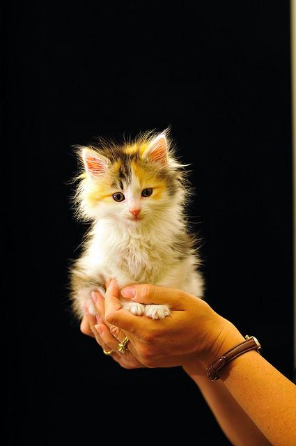 image of a kitten