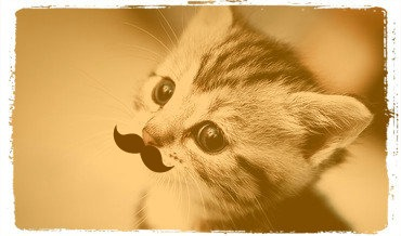cute kitty with a mustache